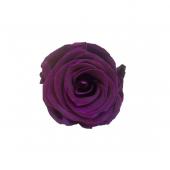 6 roses éternelles violet foncé