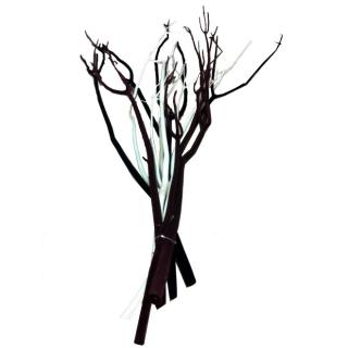 Mitsumata blanc (lot de 3 branches)