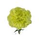 Oeillet sims vert - France Fleurs