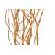 Saule tortueux - Salix (10 tiges)