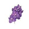 Orchidée Vanda (16 fleurons)