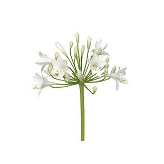 Livraison fleurs et feuillage en gros pour particuliers francefleurs france fleurs - Grossiste fleurs coupees pour particulier ...