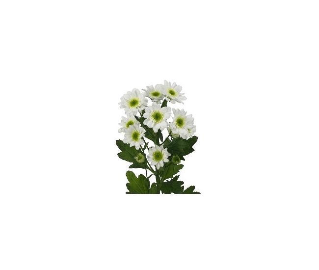 Livraison de santini pas cher livraison fleur coup e for Livraison fleurs pas cher 10 euros