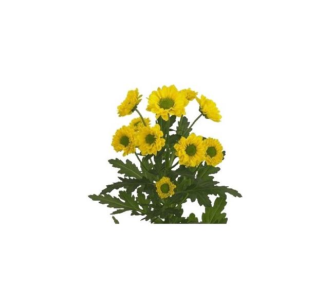 livraison de santini pas cher livraison fleur coup e france fleurs. Black Bedroom Furniture Sets. Home Design Ideas