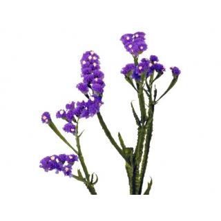 Statice violet (5 tiges)