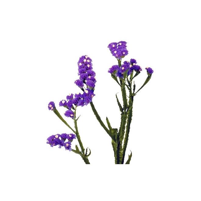 quelles fleurs en septembre mariage quelles fleurs utiliser pour la dcoration arche fleurie. Black Bedroom Furniture Sets. Home Design Ideas