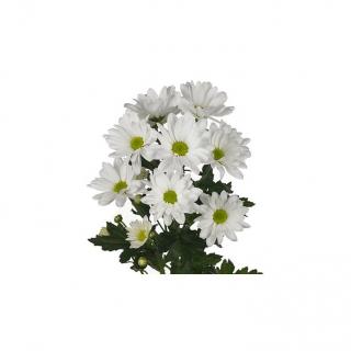 Alvéolé blanc