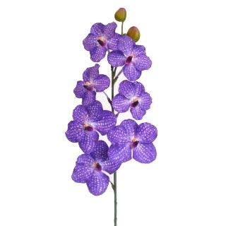 Orchidée Phalaenopsis (25 fleurons)