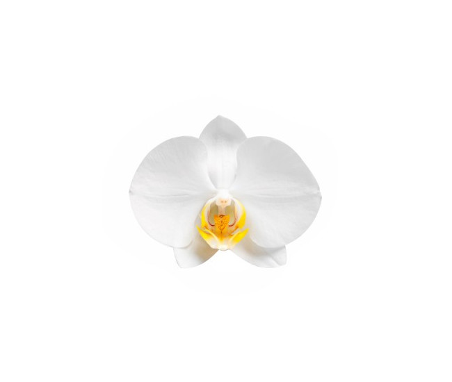 d2eb6ce8ba71 Fleurons d orchidée phalaenopsis - Livraison orchidée - France Fleurs