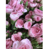 Mini oeillet rose tendre (10 tiges)