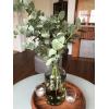 Eucalyptus cinerea - Feuillage Eucalyptus vase