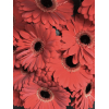 Gerbera rouge (15 tiges)
