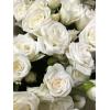 Rose branchue blanche - France Fleurs