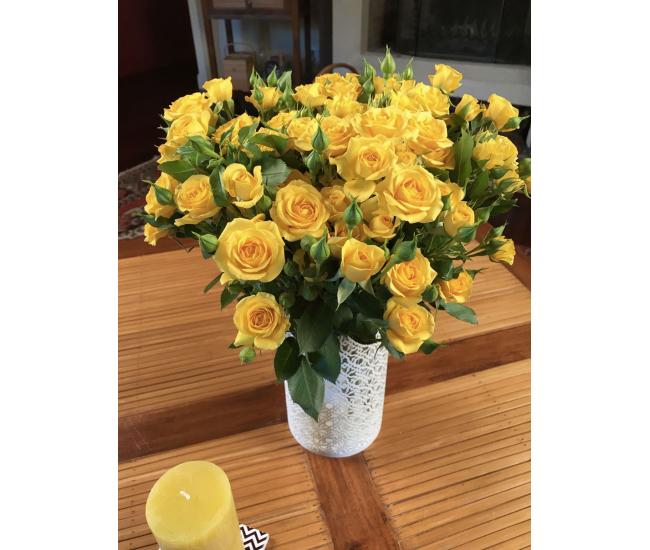 Rose Branchue Jaune Roses Ramifiees Pas Cheres France Fleurs