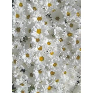 Santini vert - France Fleurs