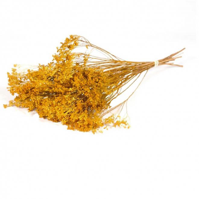 Broom Bloom séché jaune (environ 85gr)