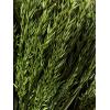 Avoine séchée verte (botte de 100gr)
