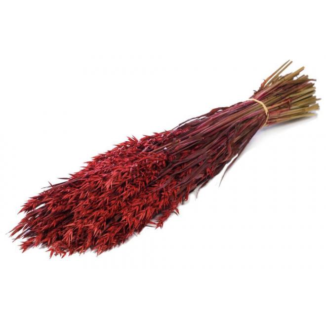 Avoine séchée rouge (botte de 100gr)