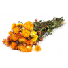 Hélichrysum séché orange (botte de 185gr)