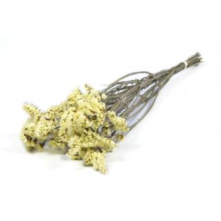 Statice séché jaune (env 10 tiges)