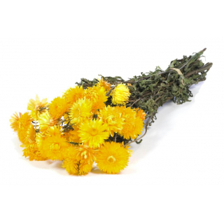 Hélichrysum séché jaune (185gr)
