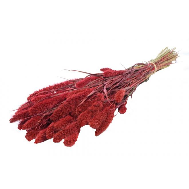 Sétaire séchée rouge (125gr)