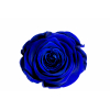 6 roses éternelles bleu nuit