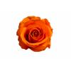 6 roses stabilisées orange - roses éternelles - France Fleurs
