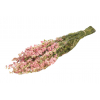 Delphinium séché rose (env 100g)