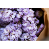 Statice séché lilas (env 10 tiges)