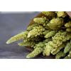 Amaranthe séchée verte (env 100gr.)