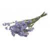 Statice séché lilas (5 tiges)