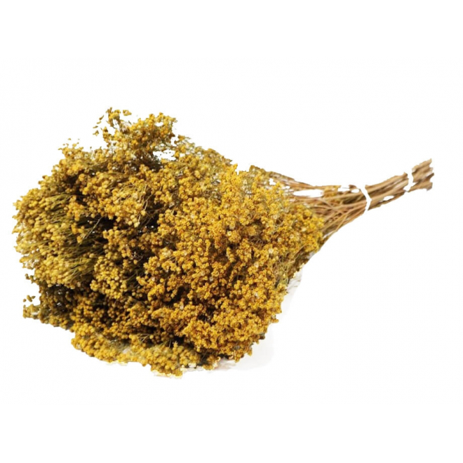 Broom Bloom séché naturel (100gr)