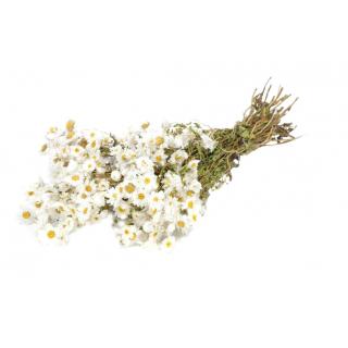 Rhodanthe séchée blanche (botte de 75gr)