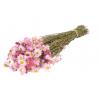 Acroclinium séché rose (botte de 70gr)
