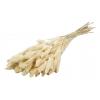 Sétaire séchée blanche (env 125g)