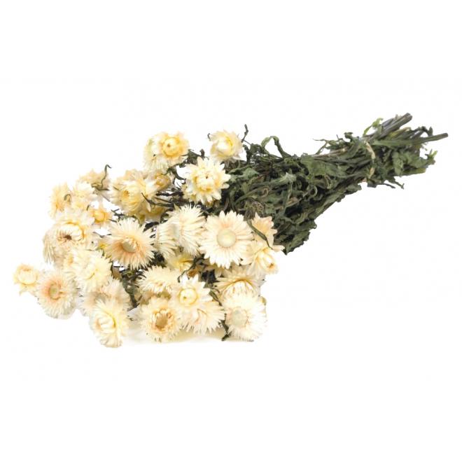 Hélichrysum séché blanc (env 50gr.)