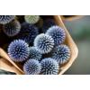 Echinops séché bleu (10 tiges)