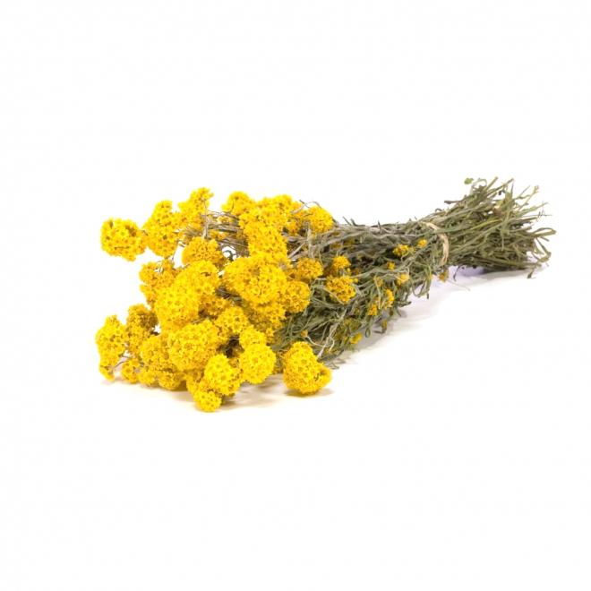 Sanfordii Seche Jaune Fleur Sechee A Prix Doux Pour Votre Deco