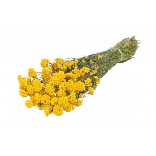 Lona séché jaune (100 gr.)