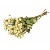 Rose branchue séchée blanche (10 tiges)