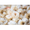 Têtes d'hélichrysum séché blanc (50gr.)