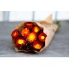 Hélichrysum séché rouge (env 100g)