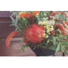 Bouquet Eastwick