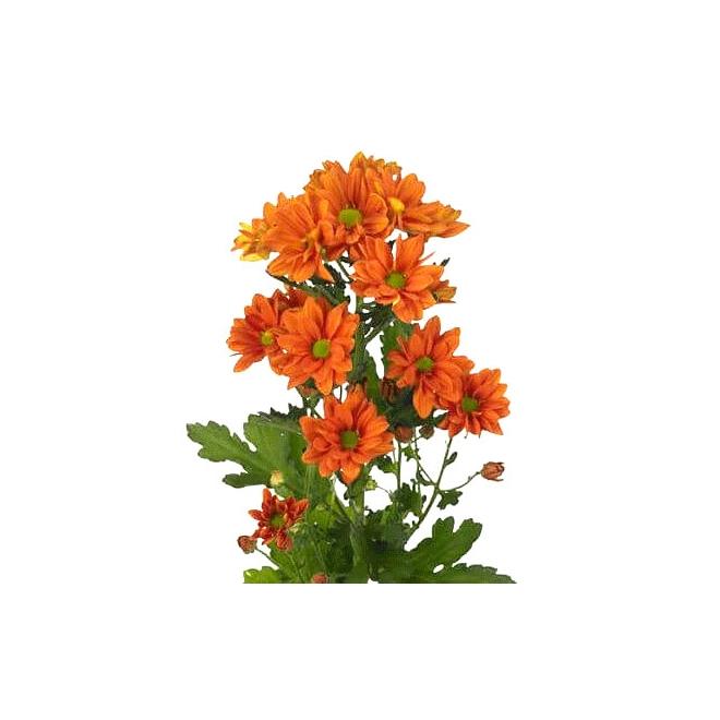 Alvéolé orange