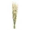 Delphinium séché blanc (env 100g)