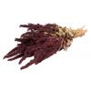 Amaranthe séchée rouge (env 100gr.)
