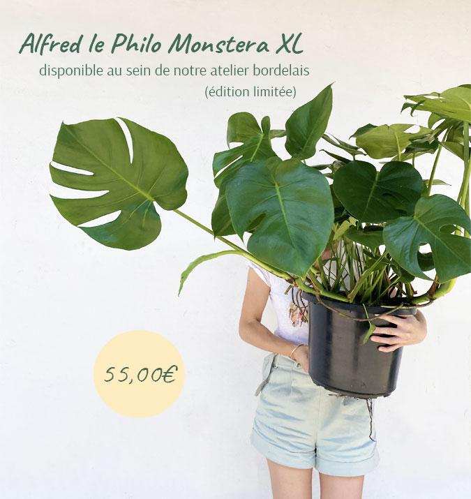 Une plante en édition limitée et au prix exceptionnel