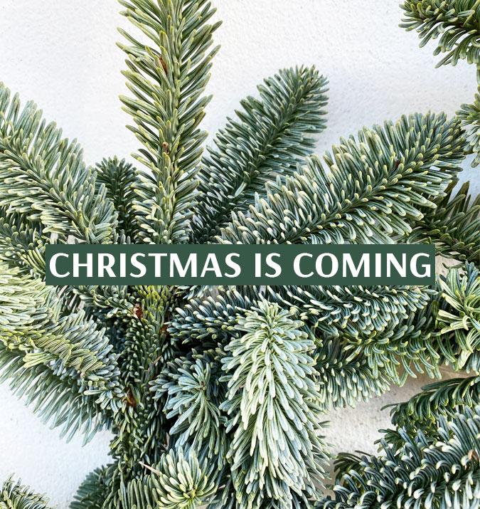 Noël approche !