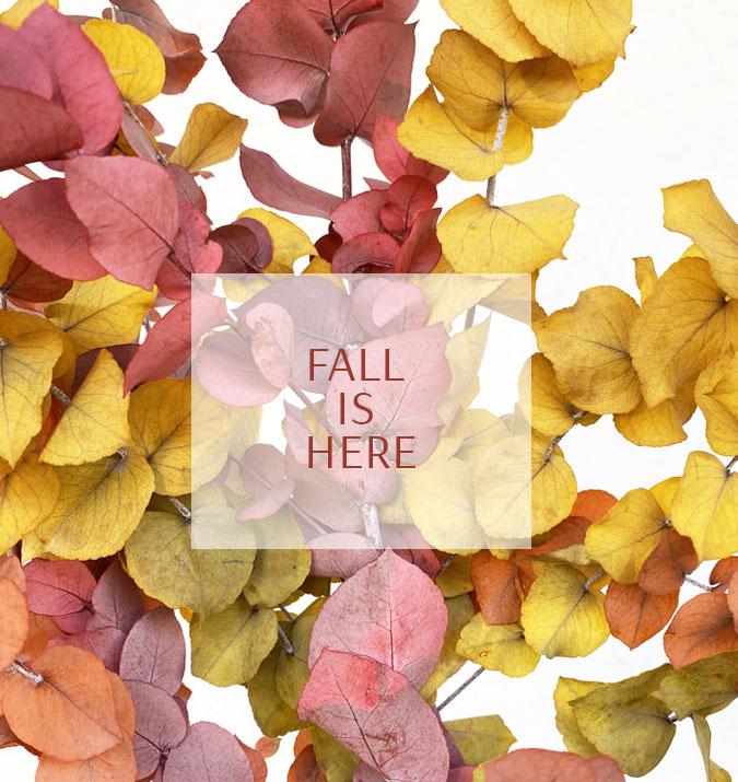 L'automne est là ! On en profite